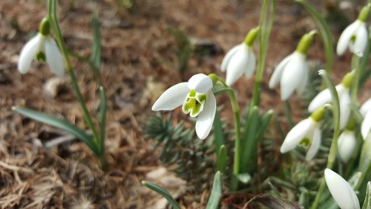Wiosna w Zduńskiej Woli