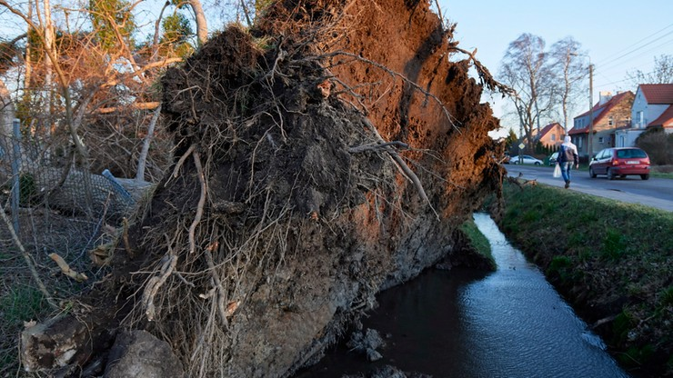 Połamane drzewa, uszkodzone domy, przerwy w dostawach prądu. Silny wiatr na północy Polski