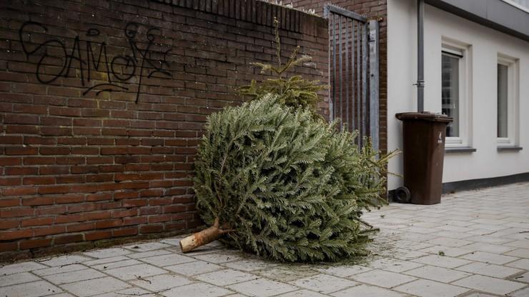 Co zrobić z choinką po świętach? Nie musi trafić do śmietnika