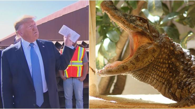 Trump chciał na granicy z Meksykiem budować fosę z wężami lub aligatorami