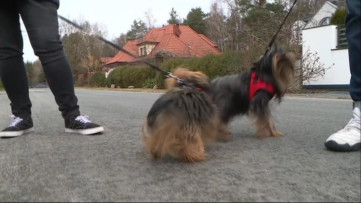 Psy zagryzły maltańczyka. Właściciel był bezradny