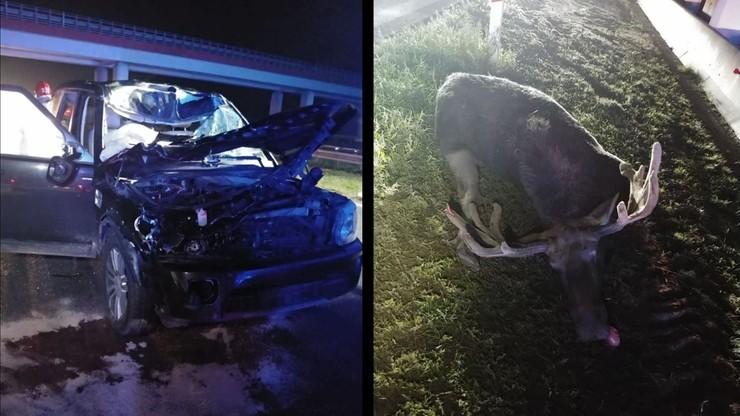 Zderzenie auta z łosiem na A1 koło Łodzi. W wypadku ucierpiało m.in. 10-letnie dziecko