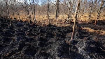 Pożar Biebrzańskiego Parku Narodowego. Znamy przyczynę