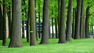 Wycinka drzew bez kontroli władz. Rewolucja w przepisach