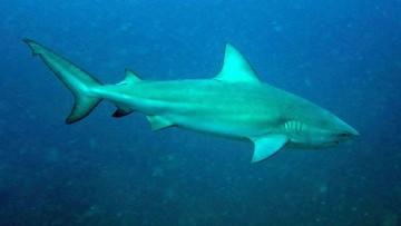 Ciężarna uratowała męża przed atakiem rekina