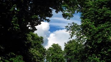Fundacja EkoRozwoju alarmuje: w miastach wycina się coraz więcej drzew