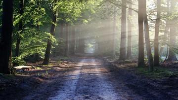 Zakaz wstępu do lasów. Powodem koronawirus