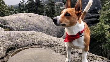 Psi detektyw. Odnalazł kolegę, chociaż ludzie szukali go przez miesiąc