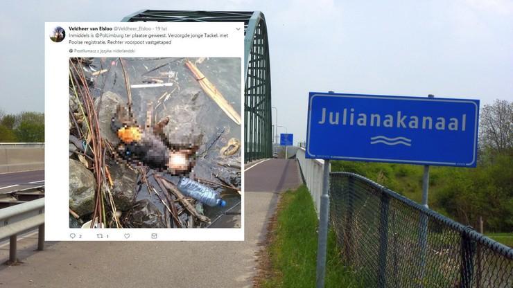 Jamnik z polskim chipem utonął w Holandii. Miał łapę przywiązaną do szyi [DRASTYCZNE]