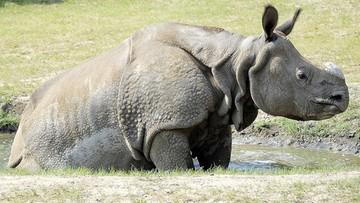 Zabito 51 kłusowników, by chronić zwierzęta