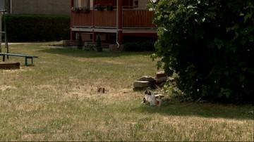 Kostrzyn: 8-latek odnalazł zwłoki młodej kobiety