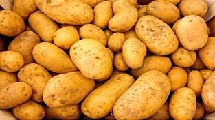 27-07-2021 05:54 Idzie rewolucja! Bardzo prosta zmiana w RNA zwiększa plony ziemniaków i ryżu nawet o połowę