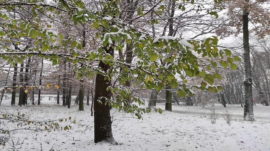 Zachodnia Polska zasypana śniegiem. Drogi i chodniki są bardzo śliskie, a krajobrazy przeurocze [ZDJĘCIA]