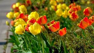 29.04.2021 00:00 Wiosenny ogród (4K)