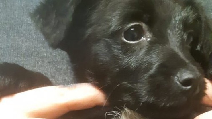 Niespełna 2-miesięczny pies wrzucony do rzeki w reklamówce