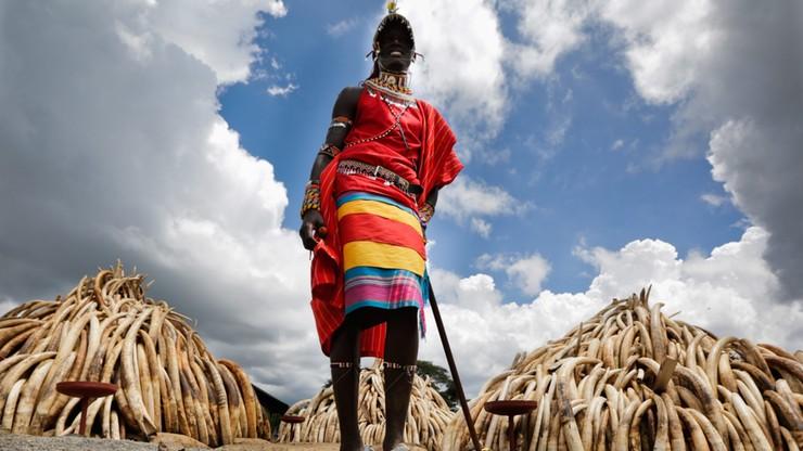Kenia: prezydent podpalił stos zarekwirowanej kości słoniowej