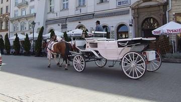 Krakowskie dorożki pod lupą prokuratury