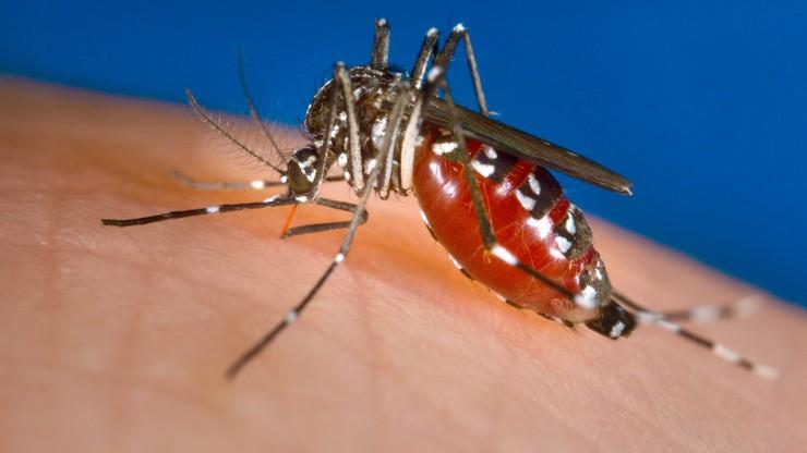 Komary tygrysie coraz bliżej Polski. Wiadomo, jak trafiły z Azji do Europy