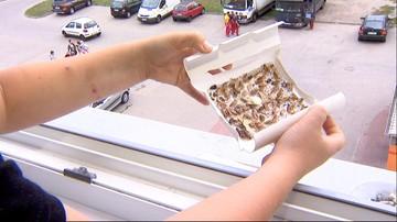 Zaplombowano lokal ze śmieciami w środku. Sąsiedzi walczą z inwazją robaków