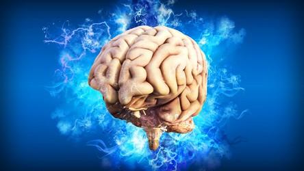 Eksperymentalne mózgi z laboratorium dojrzewają w taki sam sposób, jak u noworodka