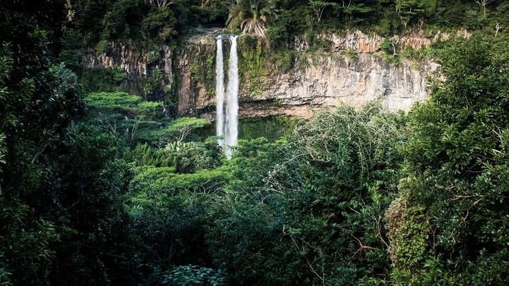 W Niemczech pojawią się lasy subtropikalne? Eksperci wyjaśniają