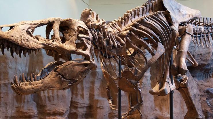 Starym dinozaurom sztywniały stawy. Tak, jak ludziom