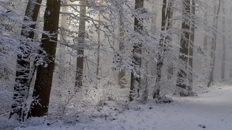 Mężczyzna w ciężkiej hipotermii odnaleziony w lesie