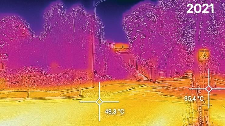 Prawie 50 stopni C po wycięciu kasztanowców. To drzewa chronią latem miasta przed nieznośnym upałem