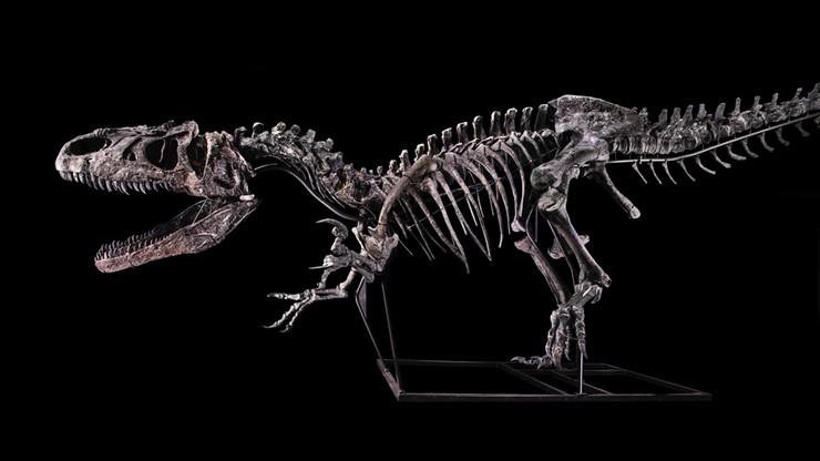 """Szkielet dinozaura sprzedany za 3 mln euro. """"To okaz wysokiej jakości"""""""