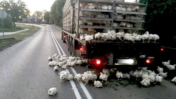 Uderzył ciężarówką w wiadukt. Setki kur wypadły na drogę, blokując ją na wiele godzin