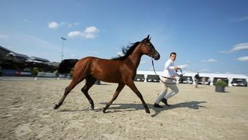 W podkrakowskich Michałowicach po raz pierwszy odbyła się aukcja koni arabskich