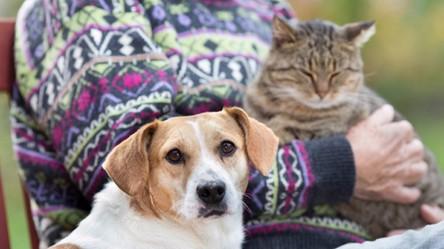 Psy i koty, tak samo jak ludzie, odpowiedzialne są za globalne ocieplenie