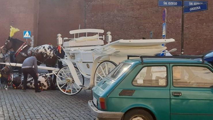 Upadł koń ciągnący dorożkę z turystami na krakowskim rynku. Wkrótce znów pracował