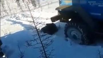 Rozjechali ciężarówką bezbronnego niedźwiedzia