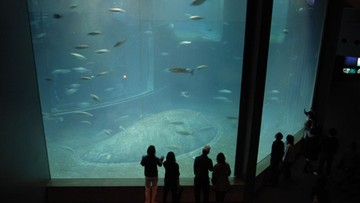 Padły prawie wszystkie ryby z wielkiego zbiornika w akwarium w Tokio. Prawdopodobnie z niedotlenienia