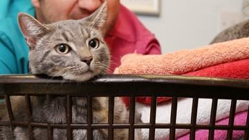 Włączyła pralkę, w bębnie siedział jej kot. Nawet nie zmarnował jednego z dziewięciu żyć!