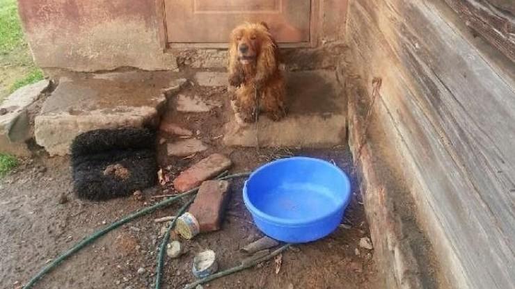 Zostawił psy bez jedzenia i wody i pojechał za granicę. Już czekają na niego policjanci