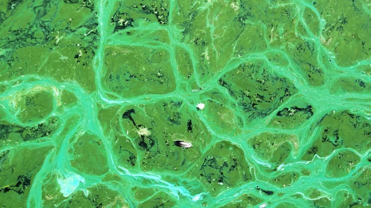 Wyhodowano sinice w warunkach przypominających klimat na Marsie