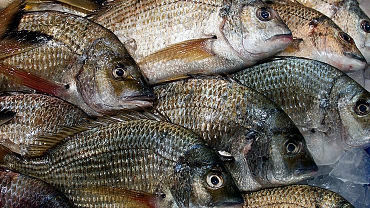 Ponad 70 Polaków strajkuje w przetwórni ryb w Norwegii