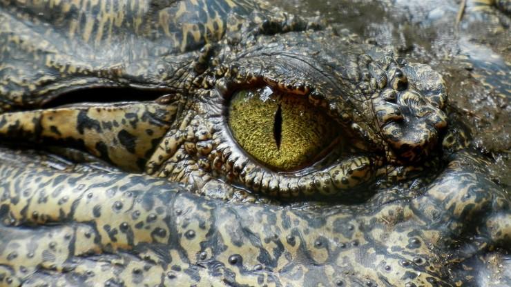 Krokodyl zabił kobietę, gdy go karmiła. Porwał zza ogrodzenia i wciągnął do basenu