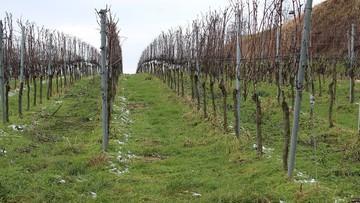 Atak zimna we Włoszech. Straty rolników nawet 100 mln euro