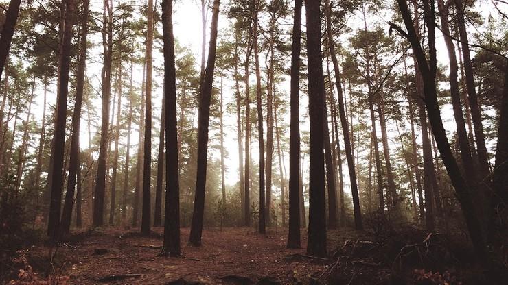 Państwo z możliwością pierwokupu lasów. Prezydent podpisał ustawę