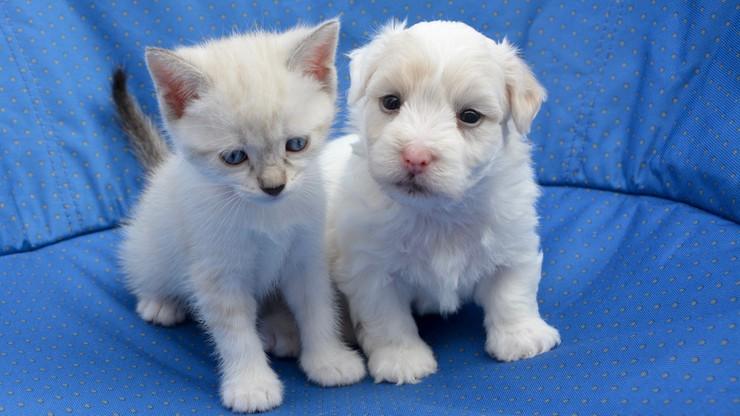 Dowody osobiste dla psów i kotów. Nietypowy pomysł rządu