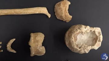 Włochy. Odkryto szczątki dziewięciu neandertalczyków