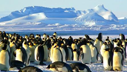 Pingwiny tak naprawdę pochodzą z… Australii i Nowej Zelandii, a nie Antarktydy