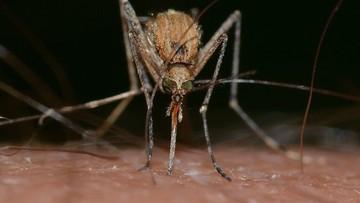 Roje komarów wybiły setki zwierząt. Wylęgły się po przejściu huraganu