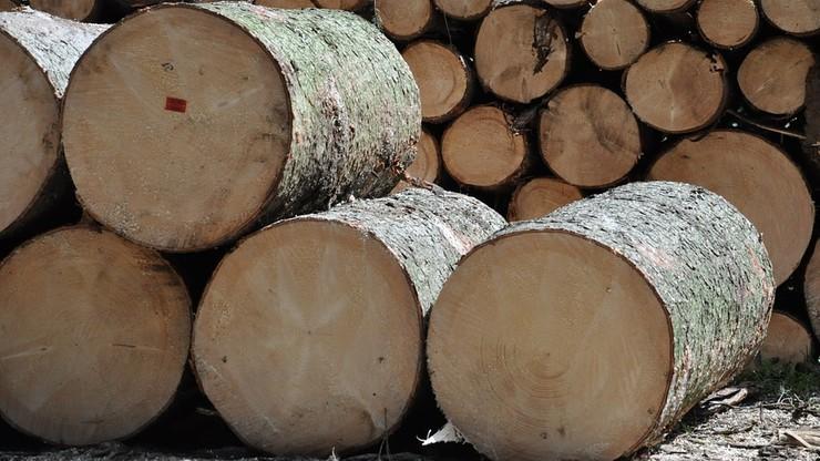 Tragiczny wypadek podczas wycinki drzew w Opolskiem. Pień spadł na pilarza