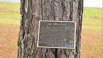 """Naukowcy szukają wyjątkowych drzew. Wyrosły z """"kosmicznych"""" nasion"""