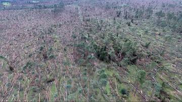 """""""Morze"""" powalonych drzew. Film z drona po nawałnicy w Suszkach"""