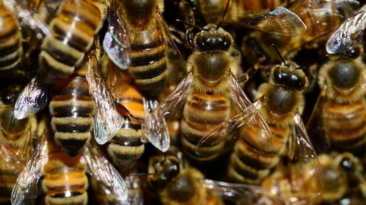 Pszczoły żyją na warszawskich centrach handlowych